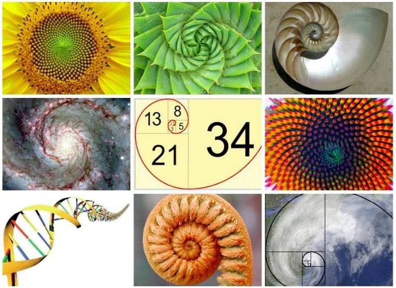 Fibonacci-spirals